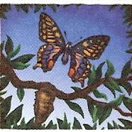 butterfly-wih-crysalis.jpg